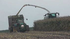 Corn crop for biogas energy stock video