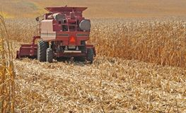 Corn Crop Harvest Royalty Free Stock Images