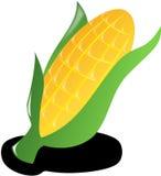 Corn, Crop, Harvest, Vegetables Royalty Free Stock Images