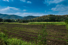 Corn crop Preparing for a new crop Mountain and sky background Royalty Free Stock Images