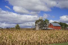 Corn and dairy farm. A corn and dairy farm lies under september skies, in rural minnesota Stock Photography