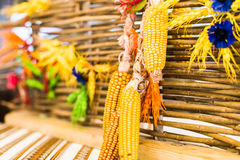 Corn decoration hanging on fence. Dried gold corn as a decoration hanging on a wooden fence royalty free stock photography