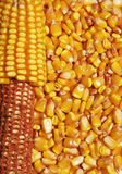 Corn detail Royalty Free Stock Photos