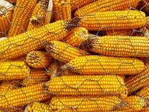 Corn Detail Stock Photos