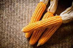 Corn dry Stock Images