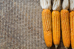 Corn dry Stock Photography