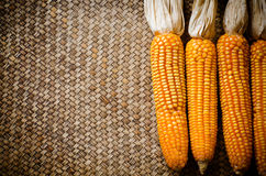 Corn dry Stock Image