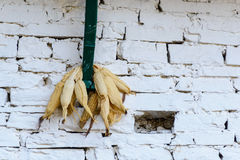 Corn drying Royalty Free Stock Photo