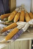 Corn drying on wood for the seeds to cultivate.  stock photos