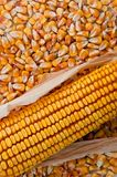 Corn ear royalty free stock photos