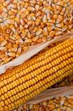 Corn ear Royalty Free Stock Photos