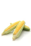 Corn in the ear Royalty Free Stock Photos