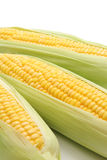 Corn in the ear Stock Photos