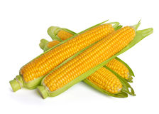 Corn ear Stock Photo