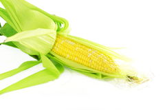 Corn ear closeup in pure white background Stock Photos