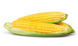 Corn ear group. On white background royalty free stock photo