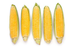 Corn ear group Stock Photos