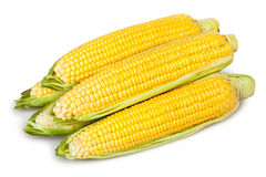 Corn ear heap Royalty Free Stock Photos
