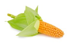 Corn ear isolated Stock Images
