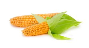 Corn ear isolated Royalty Free Stock Image