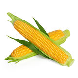 Corn ear with leaf Stock Image