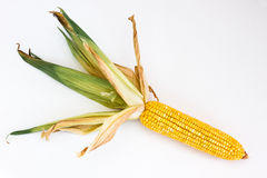 Corn ear with leaf Stock Photography