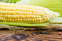Corn ear Royalty Free Stock Image