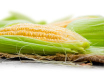 Corn ear Royalty Free Stock Photography