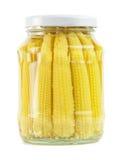 Corn ears Stock Image
