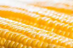 Corn ears Stock Image