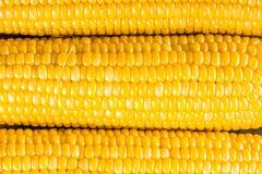 Corn ears Royalty Free Stock Photo