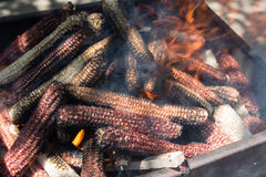 Corn ears in a barbeque fire. Wood and corn ears burning in a grill box for a barbeque fire stock photo