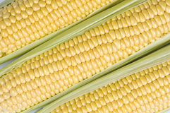 Corn Ears Close-up Royalty Free Stock Photography