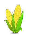 Corn ears icon Royalty Free Stock Images