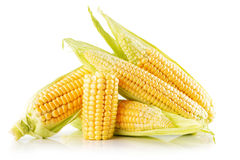 Corn ears isolated on the white background Stock Image