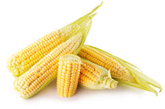 Corn ears isolated on the white background Stock Images