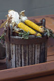 Corn ears in wooden bucket Stock Images