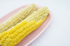 Corn eating and cob Royalty Free Stock Photography