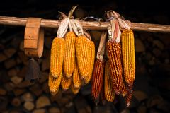 Corn end bell Royalty Free Stock Images