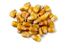 Corn for ethanol. Macro shot of golden yellow corn kernals used for ethanol shot on white background with soft shadows Stock Photography