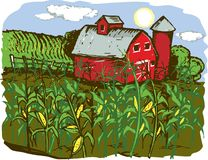 Corn Farm. A barn with corn crops in the foreground Stock Images