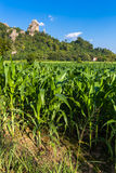 Corn Farm Stock Photo