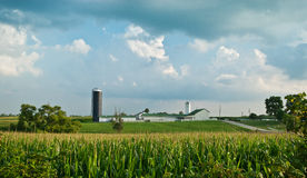 Corn Farm Landscape. A farm sits behind a cornfield under a late evening sun in Springfield, Ohio Stock Photo