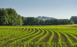 Corn farm production Stock Photography