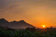 Corn farm. The sunrise on  corn farm Royalty Free Stock Photos