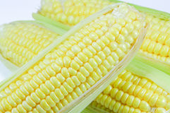 Corn. At farm in Thailand Royalty Free Stock Photos