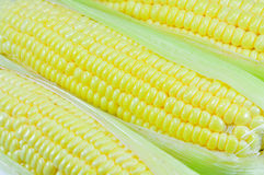 Corn. At farm in the Thailand Royalty Free Stock Images