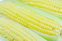 Corn. At farm in the Thailand Royalty Free Stock Photo