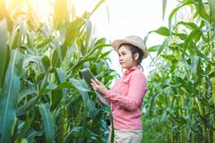 Corn farmers use communication technology to diagnose corn diseases with experts