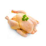 Corn-fed chicken on white background Royalty Free Stock Photos